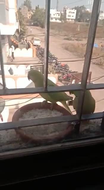 🦜राष्ट्रीय पोपट दिवस - E - ShareChat