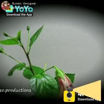 🌸 செம்பருத்தி - போஸ்ட் செய்தவர் : voyo Download the App 4Fun Download App ShareChat Vlathasaravanan 81499482 OOV Karthikraj shabana Follow - ShareChat