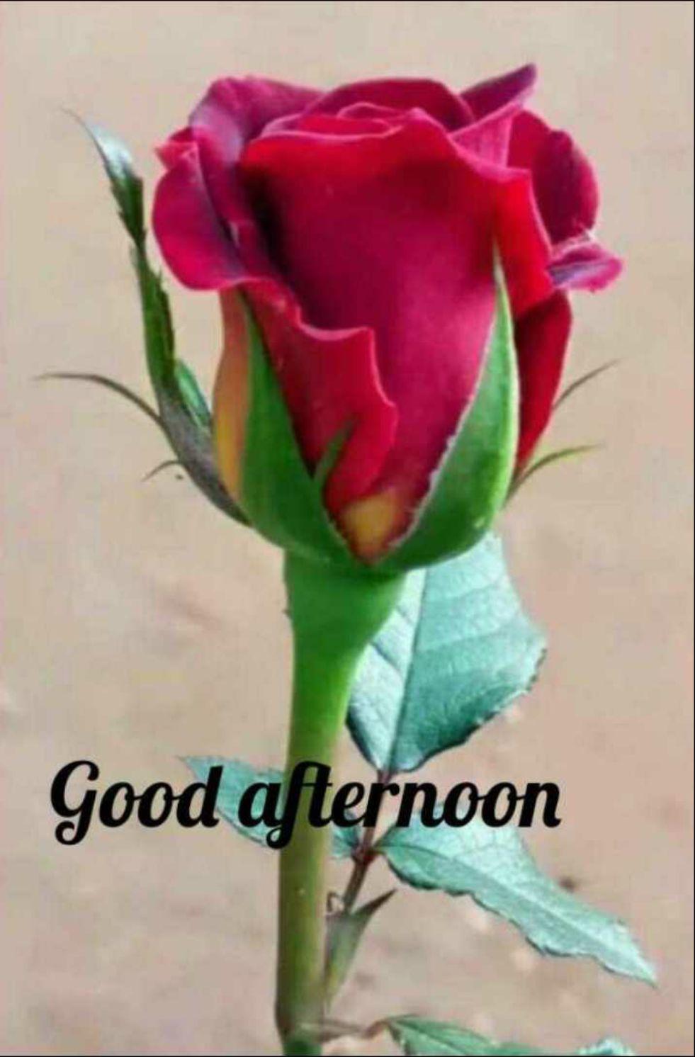 🌝শুভ দুপুর🌞 - Good afternoon - ShareChat