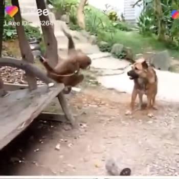 বাঁদরের ছবি 🐒 - ShareChat