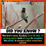 birds videos - Posted on నేనన్నారు . @ 68687288 ROPOSO se bo Sharechat DID YOU KNOW ? The . Fact . Club The bird ' s name , Surakav , Cost 25 lakh , 19 , photographer took 62 days to complete the photo , It changes colour every few second . - ShareChat