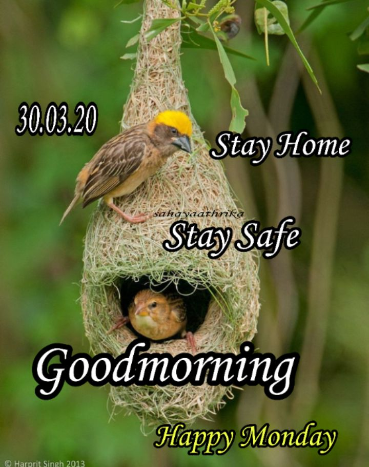 🌞 ഗുഡ് മോണിംഗ് - 30 . 03 . 20 Stay Home sahayaathrika Stay Safe Goodmoming Happy Monday © Harprit Singh 2013 - ShareChat