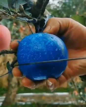 Amazing fruit Apple blue 💙 - ShareChat