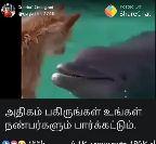 animals - ShareChat