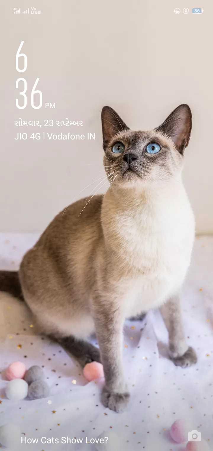 4k wallpaper - 2 . 4 . 1 od LTEA © 86 PM RİHAIR , 23 2427042 JIO 4G | Vodafone IN How Cats Show Love ? - ShareChat