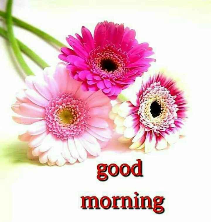 📰 5 ઓગસ્ટનાં સમાચાર - good morning - ShareChat