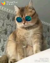cute cats - ShareChat @ 42960442 Made With ivaVideo ShareChat @ 42960442 Wade With VivaVideo - ShareChat