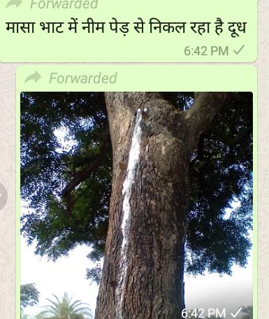 🧒 नन्ही देवी माँ - Forwarded मासा भाट में नीम पेड़ से निकल रहा है दूध 6 : 42 PMV Forwarded 6 : 42 PM - ShareChat