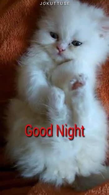 🌃 ഗുഡ് നൈറ്റ് - JOKUTTUSE Good Night JOKUTTUSE Good Night - ShareChat