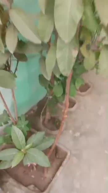 🌱पौधों को पानी - ShareChat