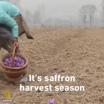 🌾 खेती की तकनीक एवं जानकारी - ShareChat