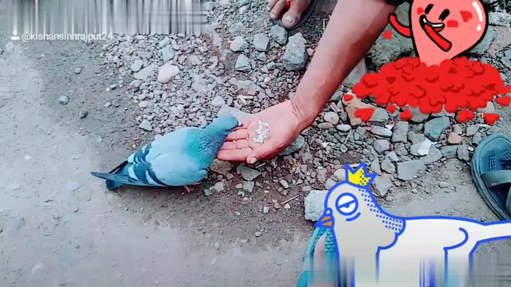 🏠 પક્ષી ઘર અભિયાન - : @ kishansinhrajput24 Sarasin rajput24 - ShareChat