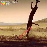 shayari sangrah - REIShareChat 20141554 NOEN RESHareChat N 141554 EDED - ShareChat