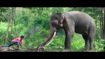 🐘 'જંગલી' ફિલ્મ 🎬 - junglee unglee - ShareChat