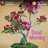 g.morning - ਪੋਸਟ ਕਰਨ ਵਾਲੇ : @ jarati65429 Posted On : ShareChat Good morning - ShareChat