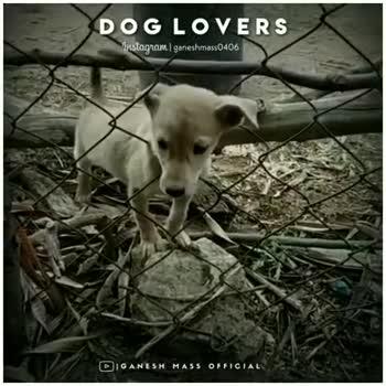 lovly dog - ShareChat