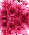 flower photo - ShareChat