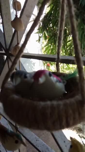 🧸 সৰুকালৰ পুতলাবোৰ - ShareChat