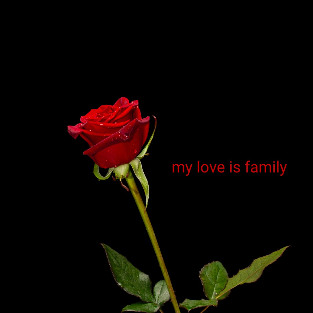 family love - my love is family - ShareChat