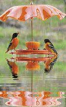 birds animals nature kids - ShareChat