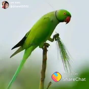 😡facebook post - ( @ bharati5502 Badbc3 / off - ShareChat
