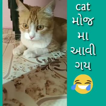 hahahaha - cat મોજ માં આવી ગય cat મોજ મા આવી ગય - ShareChat