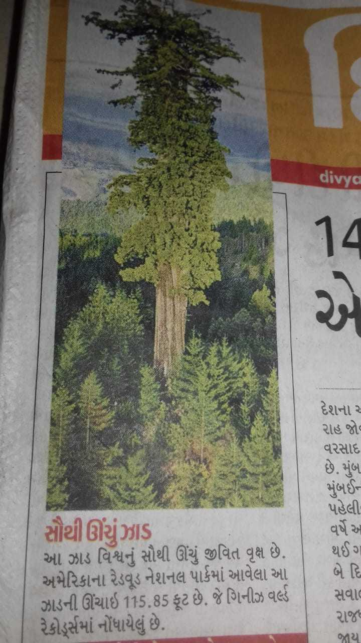 📋 7 જુલાઈનાં સમાચાર - divya દેશના ૪ રાહ જોવ વરસાદ છે . મુંબ . મુંબઈ પહેલી વર્ષે આ સૌથી ઊંચું ઝાડ આ ઝાડ વિશ્વનું સૌથી ઊંચું જીવિત વૃક્ષ છે . અમેરિકાના રેડવૂડ નેશનલ પાર્કમાં આવેલા આ ઝાડની ઊંચાઇ 115 . 85 ફૂટ છે . જે ગિનીઝ વર્લ્ડ રેકોર્સમાં નોંધાયેલું છે . થઈ ગ બે દિ સવાલ રાજ જાય - ShareChat