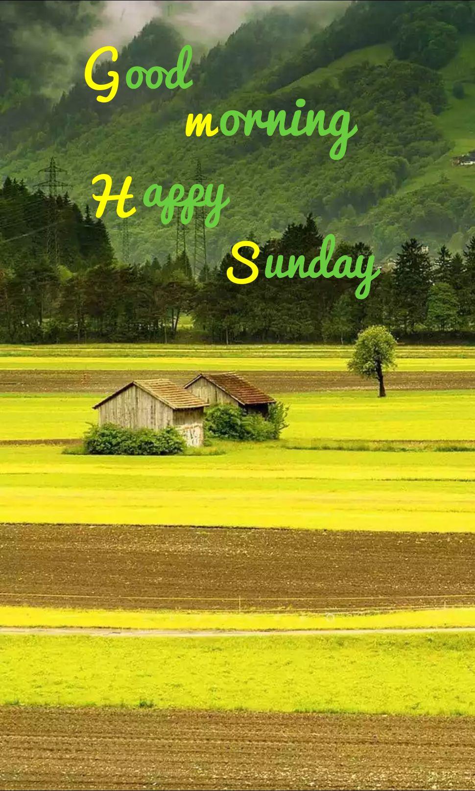 🕉ఆదివారం స్పెషల్ విషెస్ - Good morning Happy Sunday - ShareChat
