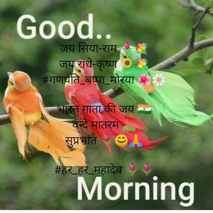 🌞 सुप्रभात 🌞 - Good . . जय सिया - राम १ जय राधे - कृष्ण # गणपति बप्पा मोरया : भारत माता की जय वन्दे मातरम सुप्रभात 9A # हर _ हर _ महादेव Morning - ShareChat