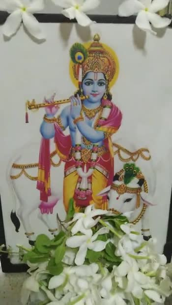 🙏శ్రీ కృష్ణ జన్మాష్టమి శుభాకాంక్షలు - ShareChat