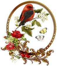 Birds - ShareChat