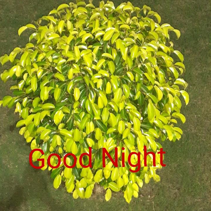 ভারতের পতাকা 🙏 - Good Night - ShareChat