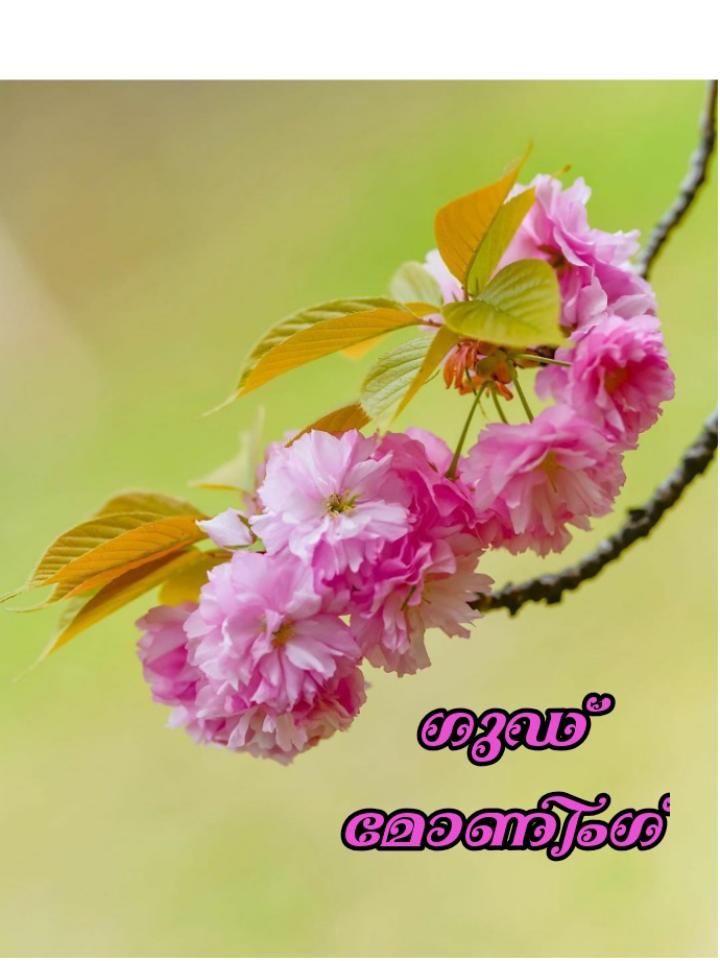 🌞 ഗുഡ് മോണിംഗ് - ஸ்ரீ வேஸினி - ShareChat