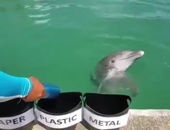 💓 நெஞ்சே நெஞ்சே - PAPER PLASTIC METAL PAPER PLASTIC METAL - ShareChat