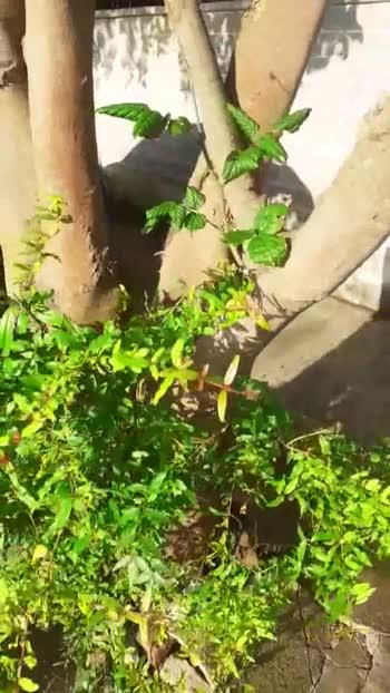 🌳 ಮರದ ವಿಡಿಯೋ - ShareChat