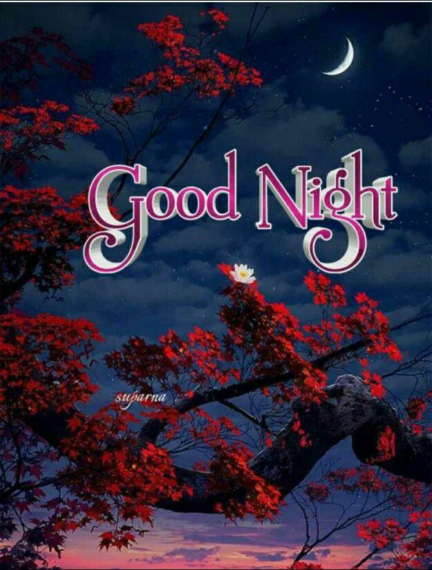 good night - Good Night Surna - ShareChat