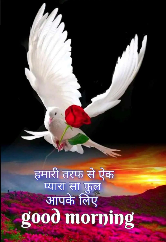 🌷शुभ मंगलवार - हमारी तरफ से ऐक प्यारा सा फुल आपके लिए good morning - ShareChat