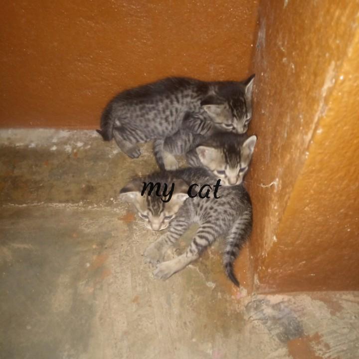 🙎🏽అమ్మ ప్రేమ - my cat - ShareChat