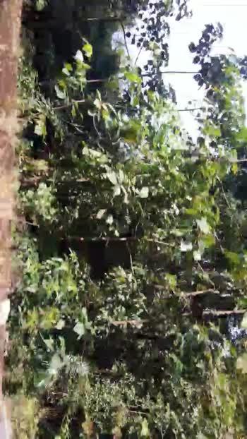 nature - ShareChat