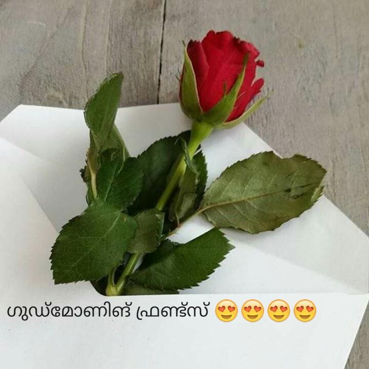 🌞 ഗുഡ് മോണിംഗ് - - ഗുഡ്മോണിങ് ഫ്രണ്ട്സ് 29 29 ( 2 - ShareChat