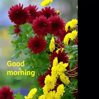 🌞সুপ্রভাত - Good Morning GOODMORNING . - ShareChat