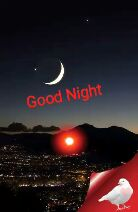 ଶେୟରଚେଟ୍ ଗଟ ଟେଲେଣ୍ଟ - Good Night Good Night - ShareChat