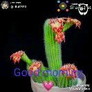 সুপ্ৰভাত - পােস্ট করেছে : @ sital9550 Posted on Sharechat GGOT Made With Viva Video Pealed One Sharechat শেয়ারচ্যাট বাংলার মানুষ , বাংলার আওয়াজ ! ১০০ % বাংলা অ্যাপি Get it on Google play  - ShareChat