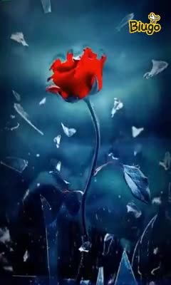 🌹Happy Rose Day - ShareChat