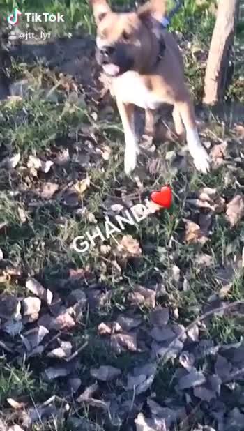 👌singaa new song hobby - ShareChat