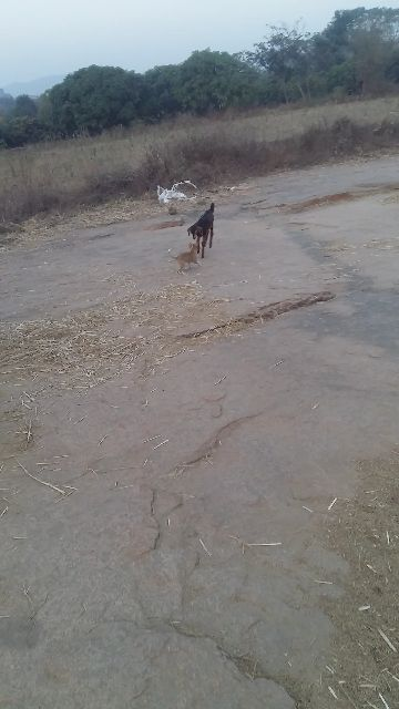 i love dog - ShareChat