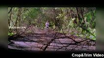 s ravananya - PANDIAN Crop & Trim Video - ShareChat