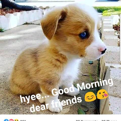 💓good morning 💓 - hyee . . . Good Morning a dear friends - ShareChat
