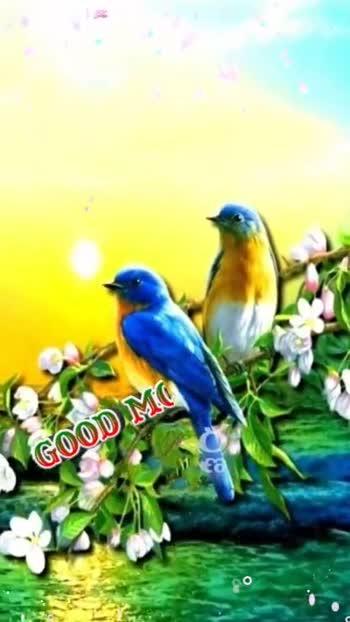 🗣️ 📸 డబ్ స్మాష్ వీడియోస్ - TONDING riday Happd GOOD MORNING Friday Happy - ShareChat