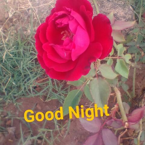 મારી લાઈફ ok yas - Good Night - ShareChat